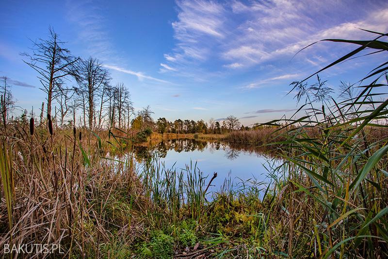 Krajobrazy Wielkopolski
